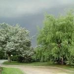 Денежное дерево-аватар